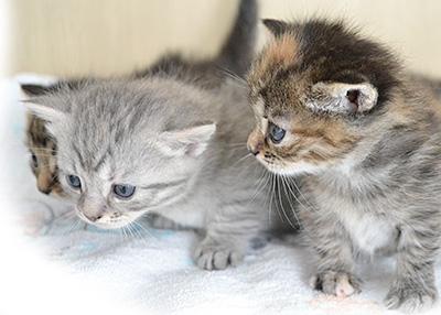 ペットにピキャットクリアを使用する場合肝心なのは濃度