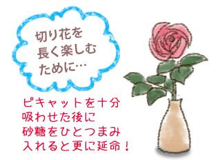 切り花を長く楽しむために